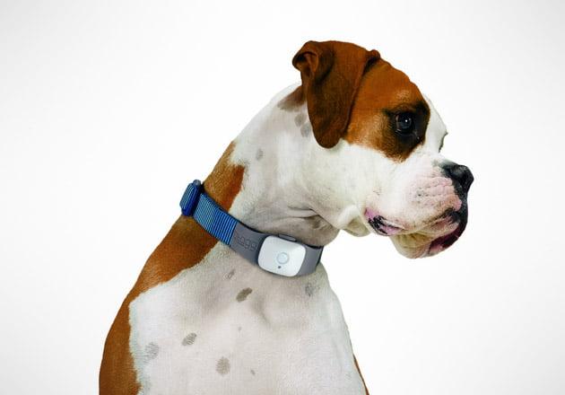 Hund GPS